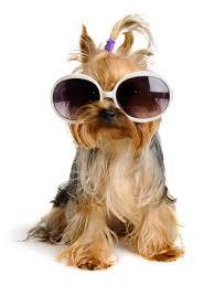 маркови слънчеви очила