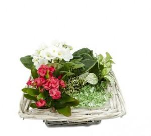 аранжировки цветя и букети